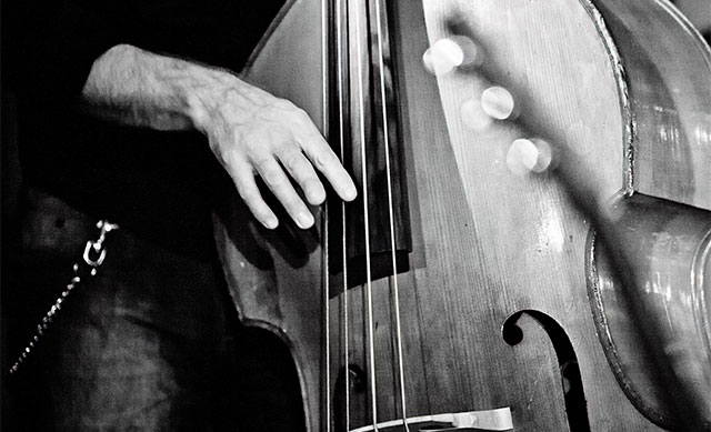 Closeup contrabass - press photo